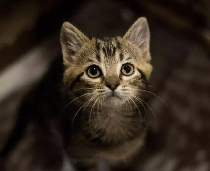 请不要给猫咪带项圈,建议转载朋友圈!