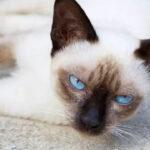 新西兰惊现心机猫,一猫侍二主蹭吃十年