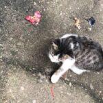 我失去了一只猫