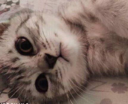 猫咪失踪十六天后还能不能找回来?