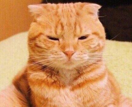初识大橘,人们会被橘猫吸引的原因是什么?