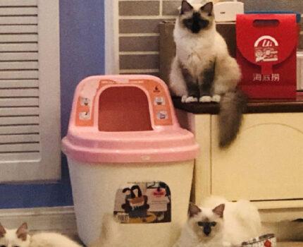 哪种猫砂盆好用?