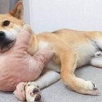 不瞒你说,我家里的颜值担当,是狗!
