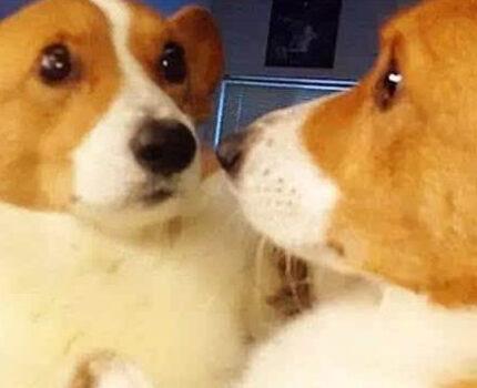 狗狗是否存在自我意识呢?