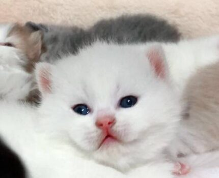 养猫好物推荐