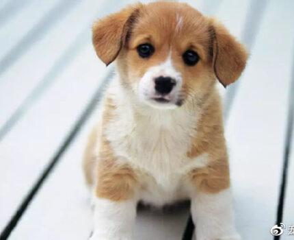 狗狗喂养小贴士