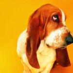 狗狗会通过什么,来确定跟主人之间的关系