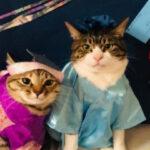 从招财猫跨界到厨师,喵星人需要几个步骤?