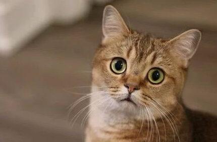 自动猫砂盆又又又卡住猫了!你还敢用吗?