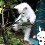 【幼猫粮】什么猫粮好?