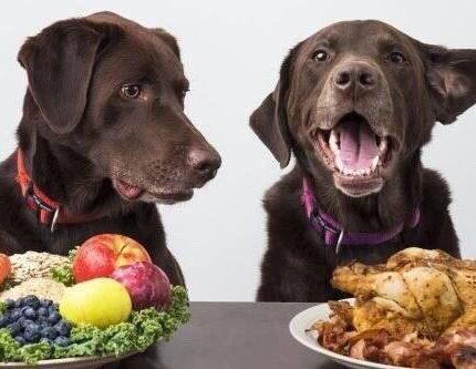 狗子真的需要吃蔬菜吗?