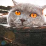 为什么有的猫不埋屎?原因有这几点