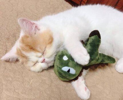 猫咪日志5