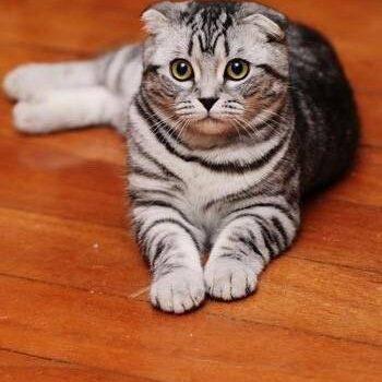 有一种猫,很美丽,但我劝你不要买