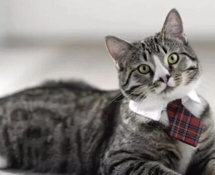 如何训练你的猫咪成为一只优秀的接客喵呢?