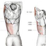 关于手臂如何正确拉伸