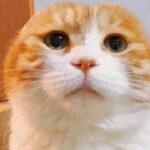 猫咪也会秃顶,越爱主人还秃得越厉害
