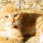 流浪猫的诞生