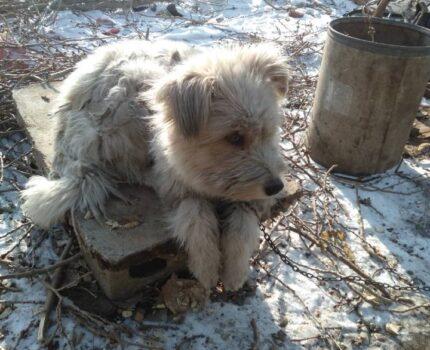 我的狗狗它叫毛球
