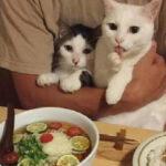 如何成功介绍新来的猫咪和平相处