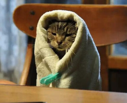 不要说你爱猫,你只是馋它的身子
