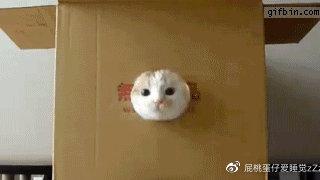 关于猫咪,你一定要知道的一些小常识!