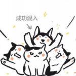 """奶牛猫是""""黑底白花""""还是""""白底黑花""""?"""