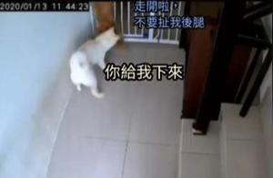 柴犬想要越狱,另一只狗狗立刻扯后腿:我出不去,你也别走