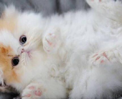 教你如何照顾新生小奶猫