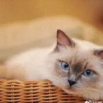 福懋动物医院:这三个关键期,关系到爱宠的一生