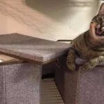 """这群""""无耻的小猫咪"""",根本搞不清楚,谁才是家里的主人!"""