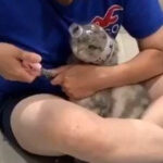 主人给猫剪指甲,看到猫咪头上的装备笑喷,网友:这办法不错