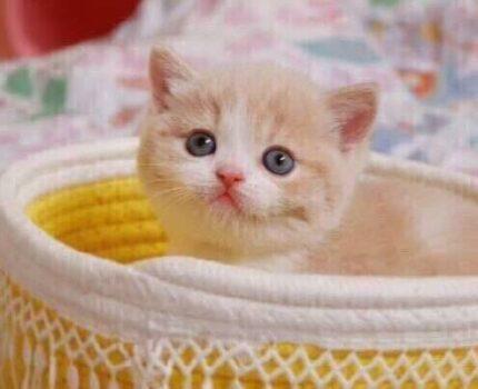 接一只猫回家,你需要准备些什么?
