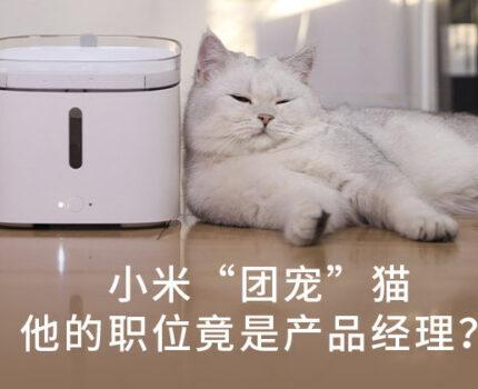 """小米""""团宠""""猫,它的职位竟是产品经理?"""