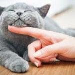 你知道猫咪有哪些比较明显的肢体语言吗?