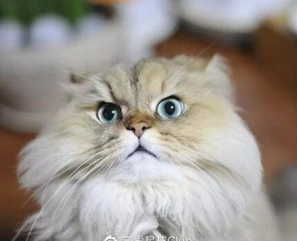 柔情似水善解人意的猫,非它莫属!