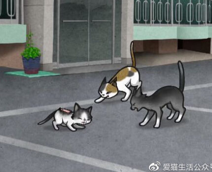 麻麻死于车祸,受重伤小猫独自流浪街头,幸遇一猫大哥后!