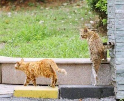 原来猫咪兄弟这么腻歪吼