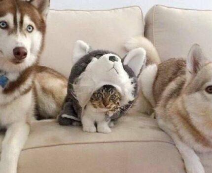 「Top3」世界上最难养的狗