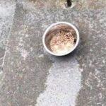 雨后地面出现奇怪的图案,一看就是猫弄的