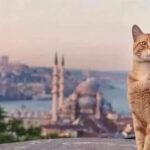 流浪喵星人的天堂   土耳其伊斯坦布尔