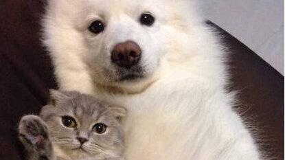 宠主需知:狗狗憋尿时间有限,超过了容易患尿结石