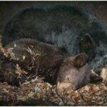 狗熊可以冬眠,人为什么不可以?睡一个冬天也太爽了吧!