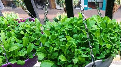 揭秘:4月份可以种植这些蔬菜,掌握技巧天天吃新鲜菜