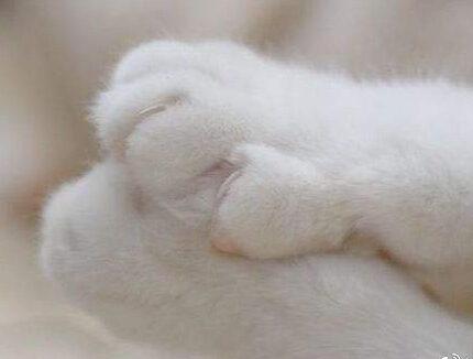猫爪印和狗爪印的区别是什么