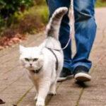 遛猫真的是为猫咪好? 遛猫之前你必须知道的几点知识,建议收藏