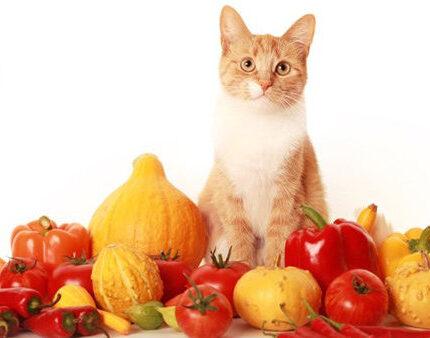 猫为什么不该吃素
