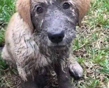 那个在泥潭里翻滚的家伙一定不是我家狗子~