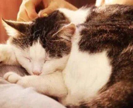 想要猫咪过得好,五岁之后的养护很重要~