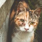 请扩散,尚无证据表明猫可以把病毒传播给人!